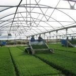 Protezione delle piante